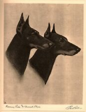 Portraits of Dogs, Cobb, 1931, etchings, SCARCE