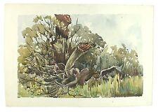 Fallen Oak Tree Landscape Signed Unframed Retro Watercolour Painting M Harrison
