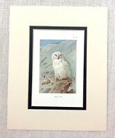 1929 Antico Uccello Stampa Snowy Gufo Gufi Arte Vintage Thorburn's Ornitologia