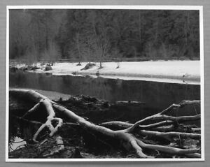 "DON CAMERON (1943-2016) SNOWBANK AND FALLEN TREE 10""X13"" PHOTOGRAPH"
