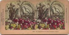 Chrysanthème Expo universelle de Paris 1900Photo Stéréo Stereoview