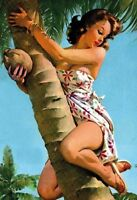 Palme Pin Up Girl Blechschild Schild gewölbt Metal Tin Sign 20 x 30 cm FA0065