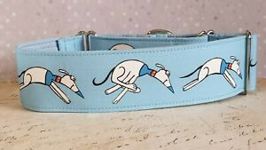 Waltah on blue. 40mm Martingale Collar. Greyhounds
