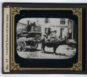 Transporting with Water Buffalo glass lantern slide Spanish American War 1900's