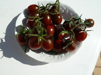 15 graines semences  tomate CHOCOLATE CHERRY     - Seeds produit en France