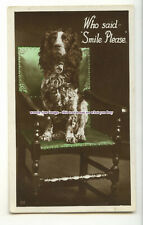 "an1721 - ""Who said Smile Please?"" Springer Spaniel sitting on a Chair - postcard"