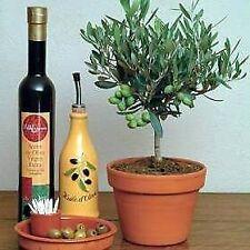 Semi di bonsai