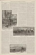 Cattle Branding Cows Cowboys Western Antique Print Text