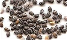 10 pcs Cassava seeds Manihot esculenta tree :V013