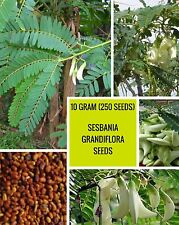 10 GRAM SESBANIA GRANDIFLORA SEEDS (250 SEEDS) FROM HOME COLLECTION