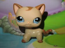 "Pet shop Chat Europeen* Petshop Kitty Cat #1024 ""Port gratuit/Free shipping""NEUF"