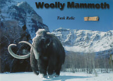 Woolly Mammoth Prehistoric Tusk Relic Display * Unique Gift Ice Age Not Dinosaur