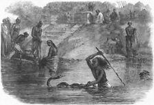 INDIA. Hindu bathers, river Yamuna surprised, snake, antique print, 1864