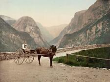 Photo. ca 1884. Norway. Norwegian Carriole - horse & carriage
