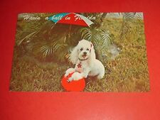 ZI43 Vintage Postcard Poodle Dog with Umbrella and Ball in Florida