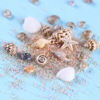 Natürliche niedliche Muschelschalen Starfish Sea Beach Ornaments 3D Nail Art Neu