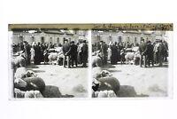 Francia Marché A Bestiame Ariège Foto Stereo T2L2n Placca Da Lente Vintage
