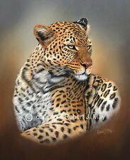 Limited Edition of 50 African Leopard Prints by Robert J. May