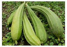 Vegetable : Ridge Gourd/Vietnamese Gourd/Chinese Okra- *Pack of 30 Seeds *