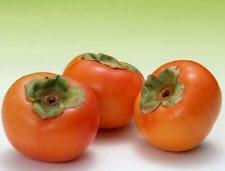 Japanese Persimmon Fruit Tree Seeds - Diospyros Kaki Persimmon Seeds 30pcs/lot