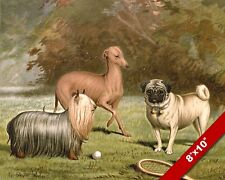 YORKIE GREYHOUND & PUG DOGS PET PUPPY DOG ART PAINTING PRINT ON REAL CANVAS