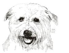Glen of Imaal Terrier Print
