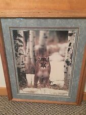 Cougar in the Aspens Signed Photograph by Richard Jackson