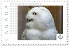 SNOWY OWL = BIRD OF PREY = Picture Postage Canada 2019 [p19-04s17] MNH VF