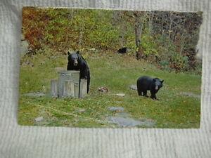Black Bears Having Lunch**