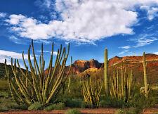 Organ Pipe Cactus - Sonoran Desert Plant - 3D Postcard  Greeting Card