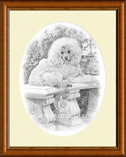 Caniche Giclee Perro Print By Lynn Paterson
