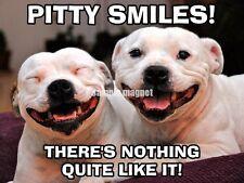 "Pit Bull Terrier Refrigerator Magnet 4"" x 3"" All Smiles"