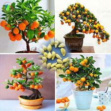 20pcs Bonsai Orange Seeds NO-GMO Fruit Pot Sweet Delicious Exotic Home Citrus