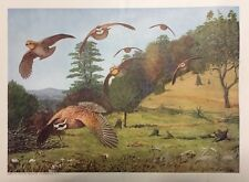 "Louis Agassiz Fuertes bird prints SET of 12 each size 12"" x 14"""