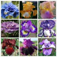 NEW! 200PCS IRIS MISSOURIENSIS FLOWER SEEDS / PERENNIAL