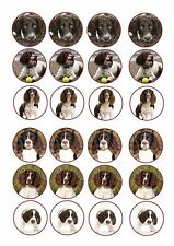 24 x edible icing cake toppers decorations English Springer Spaniel Puppys Dogs