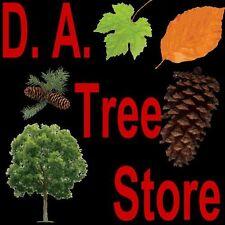 Ponderosa Pine.    50 seeds.  trees, seeds
