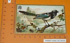 CHROMO BON-POINT IMAGE ECOLE TAPIOCA ABEILLE 1910-1925 ANIMAUX PIE OISEAUX