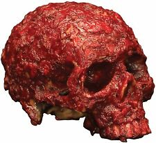 Blood Scab Resin Skull Prop Scary and Gory Prop