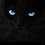 Mystical Kitty
