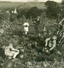 1947 Children Man Collie Dog Carving Pumpkins Harvest Cornstalk Field