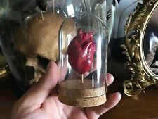 Cabinet de curiosités Oddities Globe coeur humain anatomique rouge idée cadeau