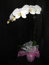 BIN- 1 Blooming/Budded Phalaenopsis Orchid PLANT- Long lasting- A gift of Aloha