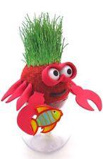 Grow-A-Head Pets Grow Your Own Grass Animal - CRAB - Grow-A Pet