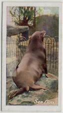 Sea Lion Pacific Ocean Eared Seal 1930 Trade Ad Card