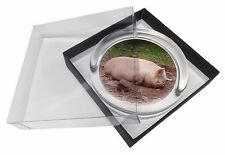 Sleeping Pig Print Glass Paperweight in Gift Box Christmas Present, AP-5PW