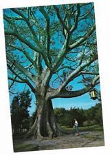 Vintage Florida Chrome Postcard Clearwater Famous Kapok Tree Lantern Woman