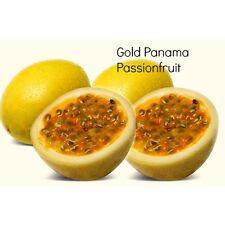 Panama Gold Passion fruit/ Passiflora edulis 10 Finest Seeds