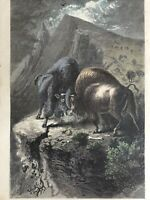 1874 CONTENDING FOR THE MASTERY TWO BULL BUFFALOES FIGHT HARPER'S WEEKLY