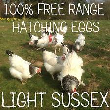 6 LARGE FOUL LIGHT SUSSEX HATCHING EGGS FREE RANGE- FERTILE/INCUBATION - REDUCED